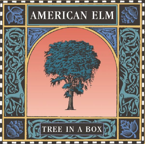 Tree in a Box - American Elm - 60% Off!!!