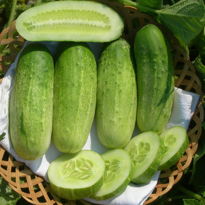 Organic Sumter Cucumber Seeds - 20 Count