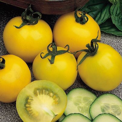 Organic Golden Girl Cherry Tomato Seeds - 20 Count