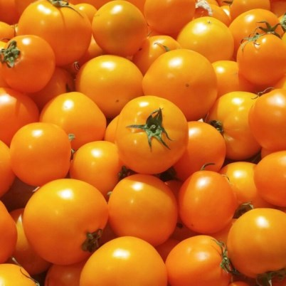 Organic Golden Sweet Tomato Seeds - 20 Count