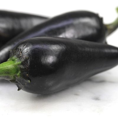 Organic Black Hungarian Pepper Seeds - 15 Count
