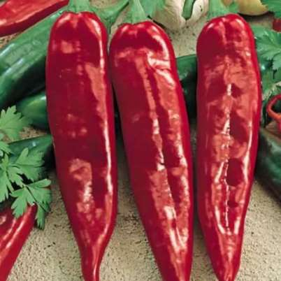 Organic Numex Joe E Parker Red Pepper Seeds - 15 Count