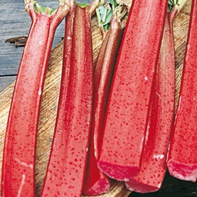 Organic Chipmans Rhubarb Seeds - 15 Count